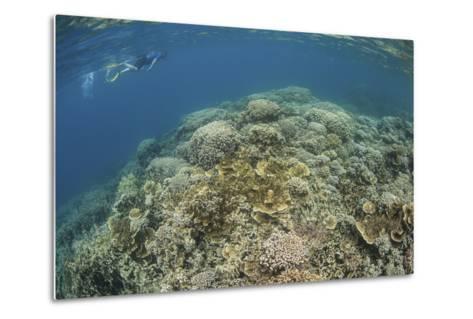 A Snorkeler Explores a Healthy Coral Reef in Palau's Lagoon-Stocktrek Images-Metal Print