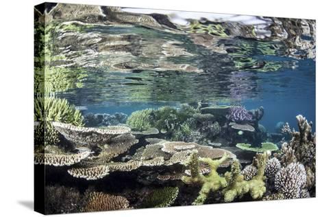 Reef-Building Corals in Raja Ampat, Indonesia-Stocktrek Images-Stretched Canvas Print