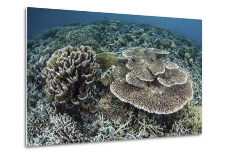 Delicate Corals Grow Near the Island of Flores in Indonesia-Stocktrek Images-Metal Print