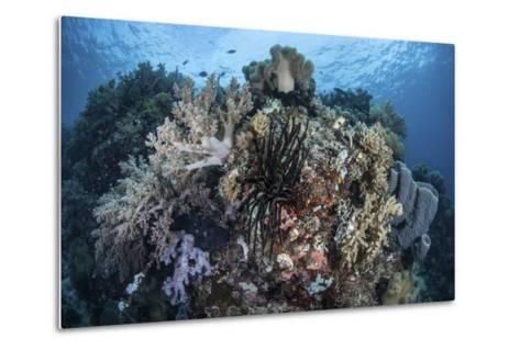 A Diverse Array of Invertebrates Cover a Healthy Reef in Indonesia-Stocktrek Images-Metal Print