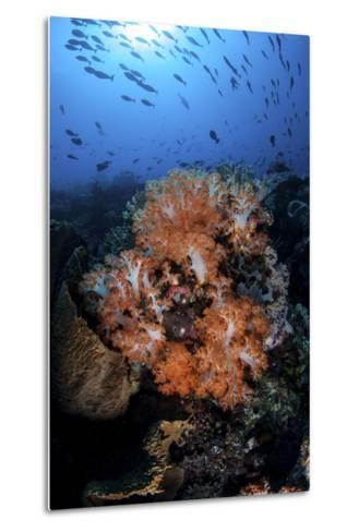 Beautiful Orange Soft Corals on a Current-Swept Reef in Indonesia-Stocktrek Images-Metal Print