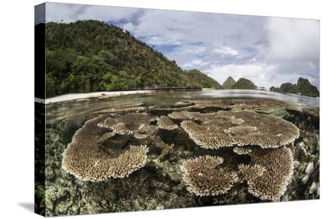 Corals Grow on a Shallow Reef in Raja Ampat, Indonesia-Stocktrek Images-Stretched Canvas Print