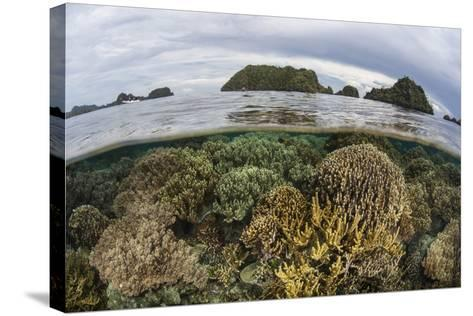 Fragile Corals Grow in Shallow Water in Raja Ampat, Indonesia-Stocktrek Images-Stretched Canvas Print