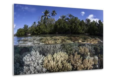 Soft Leather Corals Grow in the Shallow Waters in the Solomon Islands-Stocktrek Images-Metal Print