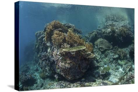 A Healthy Coral Reef Thrives in Komodo National Park, Indonesia-Stocktrek Images-Stretched Canvas Print