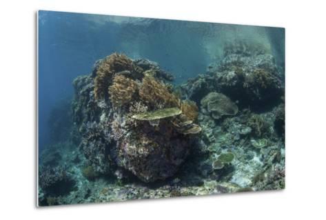 A Healthy Coral Reef Thrives in Komodo National Park, Indonesia-Stocktrek Images-Metal Print