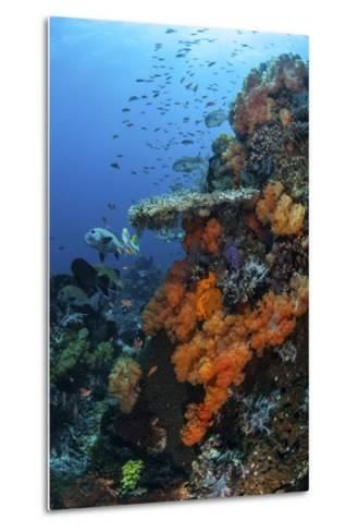 Soft and Hard Corals Grow on a Healthy Reef in Indonesia-Stocktrek Images-Metal Print