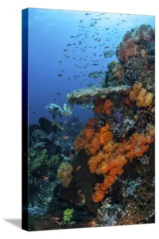 Soft and Hard Corals Grow on a Healthy Reef in Indonesia-Stocktrek Images-Stretched Canvas Print