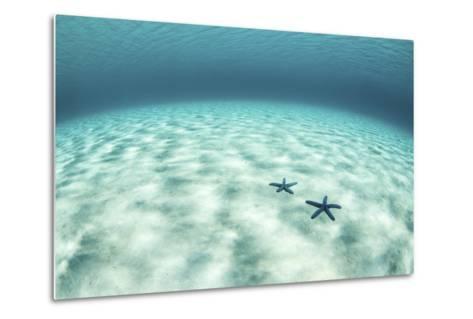Starfish on a Brightly Lit Seafloor in the Tropical Pacific Ocean-Stocktrek Images-Metal Print