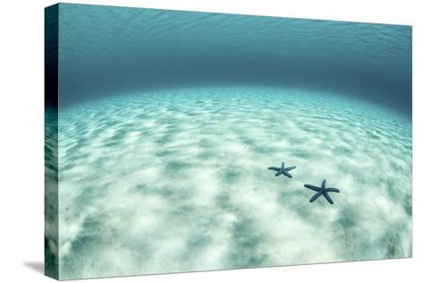 Starfish on a Brightly Lit Seafloor in the Tropical Pacific Ocean-Stocktrek Images-Stretched Canvas Print