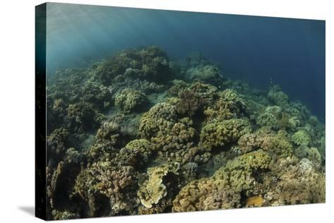 A Field of Soft Corals Grows on an Underwater Slope in Indonesia-Stocktrek Images-Stretched Canvas Print