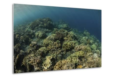 A Field of Soft Corals Grows on an Underwater Slope in Indonesia-Stocktrek Images-Metal Print