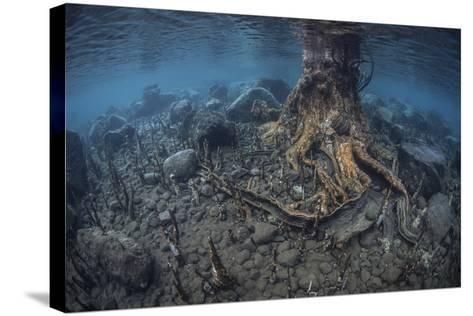 Mangrove Roots Rise from the Seafloor of an Island in Indonesia-Stocktrek Images-Stretched Canvas Print