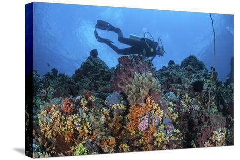 A Scuba Diver Swims Above a Colorful Coral Reef Near Sulawesi, Indonesia-Stocktrek Images-Stretched Canvas Print
