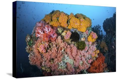 Soft Corals, Sponges, and Other Invertebrates on a Reef in Indonesia-Stocktrek Images-Stretched Canvas Print