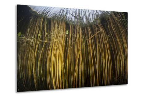 Colorful Reeds Grow to the Surface Along the Edge of a Freshwater Lake-Stocktrek Images-Metal Print