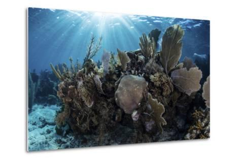 A Colorful Set of Gorgonians on a Diverse Reef in the Caribbean Sea-Stocktrek Images-Metal Print