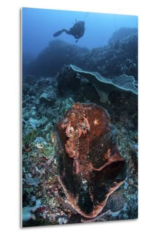 A Scorpionfish Lays on a Large Sponge on a Coral Reef-Stocktrek Images-Metal Print