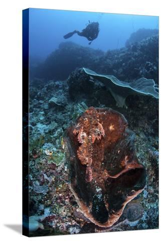A Scorpionfish Lays on a Large Sponge on a Coral Reef-Stocktrek Images-Stretched Canvas Print