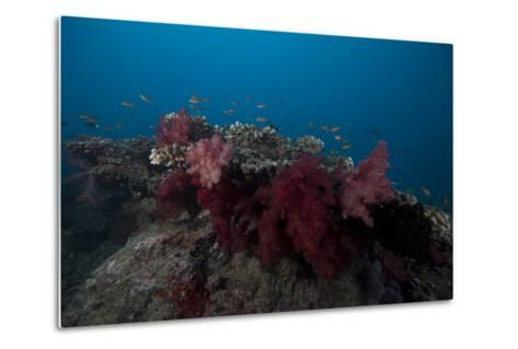 Soft Coral on a Fijian Reef-Stocktrek Images-Metal Print