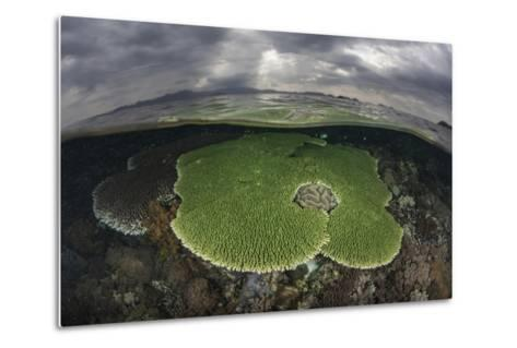 Sunlight Falls on a Beautiful Reef in Komodo National Park-Stocktrek Images-Metal Print