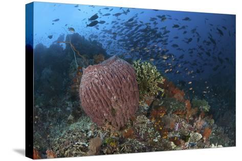 Bright Sponges, Soft Corals and Crinoids in a Colorful Komodo Seascape-Stocktrek Images-Stretched Canvas Print