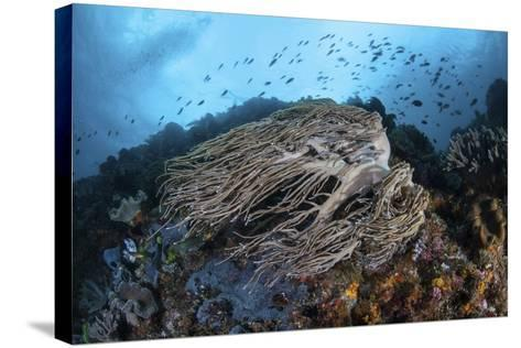 Strong Current Sweeps Along a Reef Slope in Indonesia-Stocktrek Images-Stretched Canvas Print