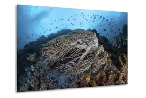 Strong Current Sweeps Along a Reef Slope in Indonesia-Stocktrek Images-Metal Print