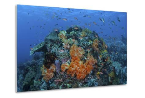 A Current Sweeps across a Colorful Coral Reef in Indonesia-Stocktrek Images-Metal Print