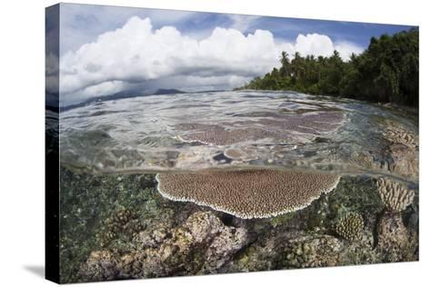 Reef-Building Corals Grow on a Reef in the Solomon Islands-Stocktrek Images-Stretched Canvas Print