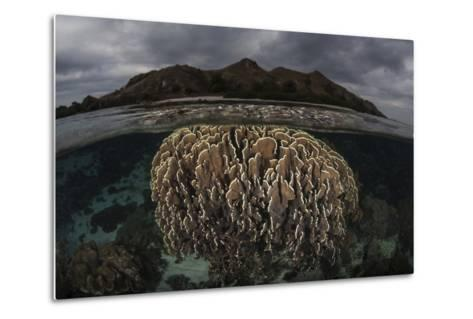 Fragile Corals Grow in Komodo National Park, Indonesia-Stocktrek Images-Metal Print