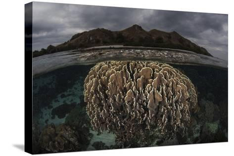 Fragile Corals Grow in Komodo National Park, Indonesia-Stocktrek Images-Stretched Canvas Print
