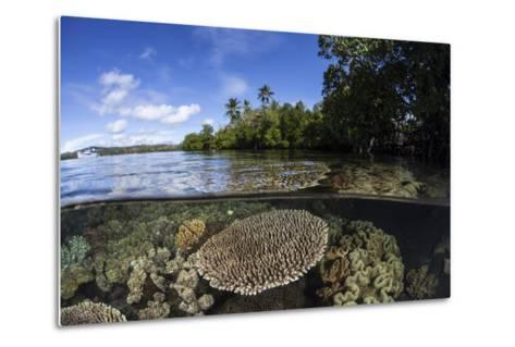 A Healthy Coral Reef Grows in the Solomon Islands-Stocktrek Images-Metal Print