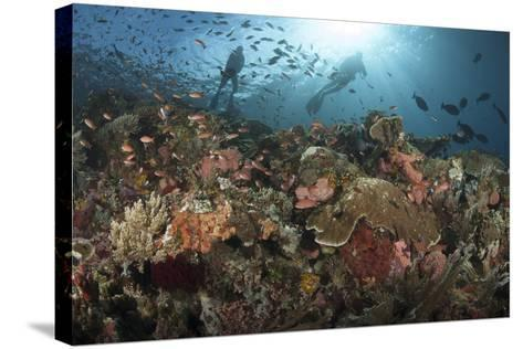 Diver Looks on at Sponges, Soft Corals and Crinoids in a Colorful Komodo Seascape-Stocktrek Images-Stretched Canvas Print