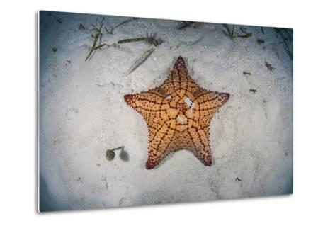 A West Indian Starfish on the Seafloor in Turneffe Atoll, Belize-Stocktrek Images-Metal Print