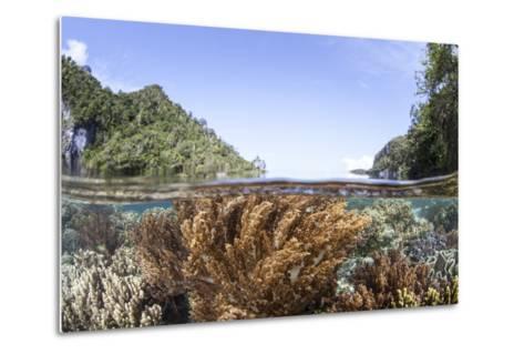 A Healthy and Diverse Coral Reef Grows in Raja Ampat, Indonesia-Stocktrek Images-Metal Print