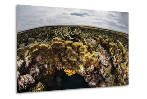 A Colorful Coral Reef Grows in Shallow Water in the Solomon Islands-Stocktrek Images-Metal Print