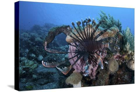 A Lionfish Displays its Venomous Spines-Stocktrek Images-Stretched Canvas Print