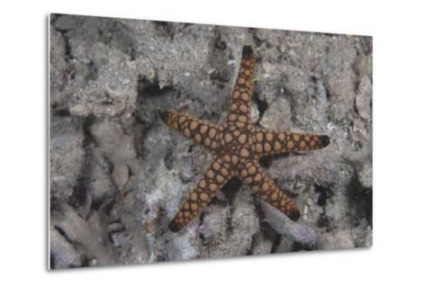 Close-Up of a Sea Star, Beqa Lagoon Fiji-Stocktrek Images-Metal Print