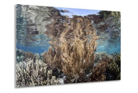 A Healthy and Diverse Coral Reef Grows in Raja Ampat, Indonesia-Stocktrek Images-Metal Print