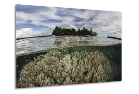 Soft Corals Thrive on a Reef in the Solomon Islands-Stocktrek Images-Metal Print