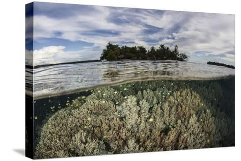 Soft Corals Thrive on a Reef in the Solomon Islands-Stocktrek Images-Stretched Canvas Print