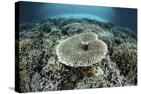 Corals Grow on a Shallow Reef in Indonesia-Stocktrek Images-Stretched Canvas Print
