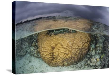 A Large Boulder Coral Colony Grows in Shallow Water in the Solomon Islands-Stocktrek Images-Stretched Canvas Print