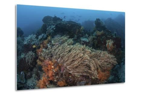 A Strong Current Sweeps across a Reef Slope in Indonesia-Stocktrek Images-Metal Print