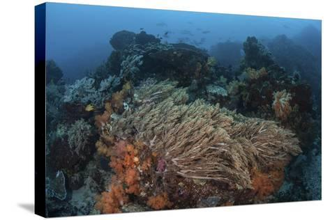 A Strong Current Sweeps across a Reef Slope in Indonesia-Stocktrek Images-Stretched Canvas Print
