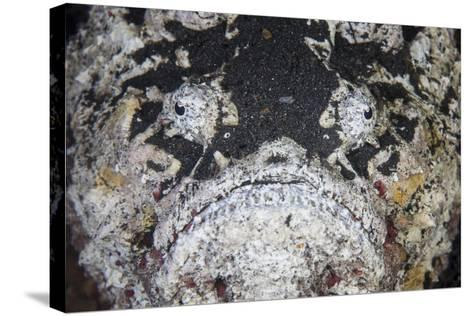 A Reef Stonefish Blends into its Underwater Surroundings-Stocktrek Images-Stretched Canvas Print