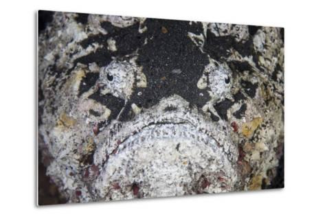 A Reef Stonefish Blends into its Underwater Surroundings-Stocktrek Images-Metal Print