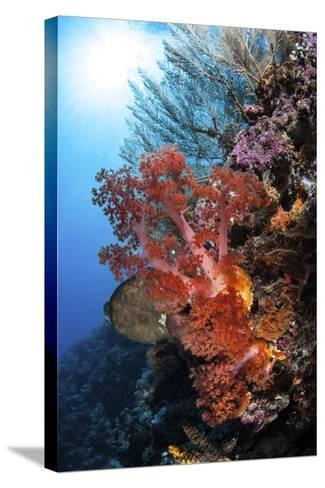 Soft Corals and Other Invertebrates Grow on a Reef in Indonesia-Stocktrek Images-Stretched Canvas Print