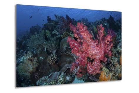 A Beautiful Soft Coral Colony on a Coral Reef in Indonesia-Stocktrek Images-Metal Print